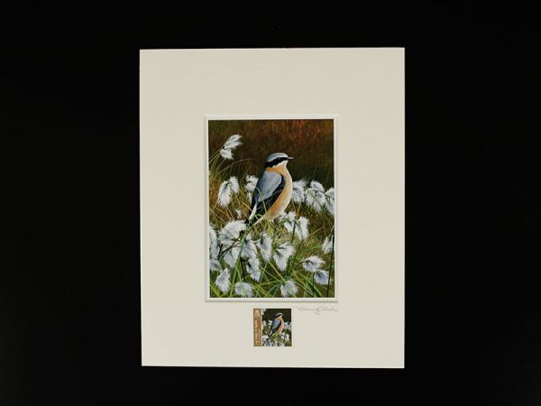 Jeremy Paul Town & Country Birds Signed Wheatear Print