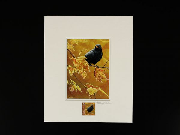 Jeremy Paul Town & Country Birds Signed Blackbird Print